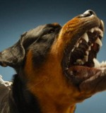 Assurance responsabilité civile pour chiens dangereux