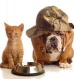 L'assurance pour votre animal de compagnie est-elle vraiment profitable ?
