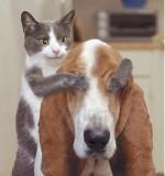 Assurance pour votre chat